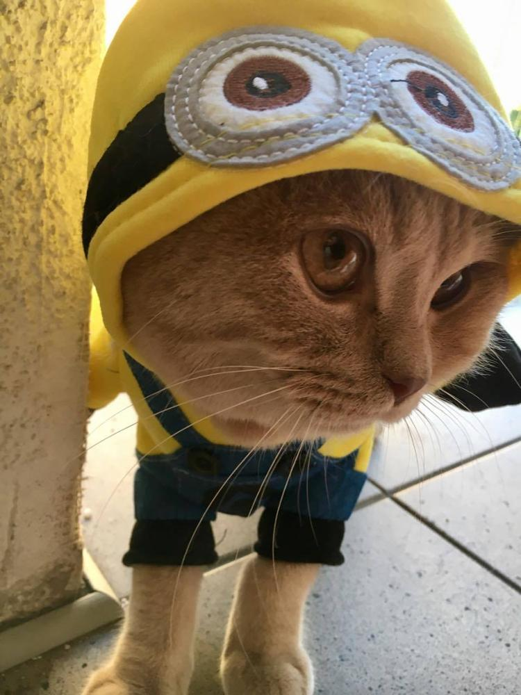 Dog Clothes Funny Pet Outfit Supply Halloween Suit For Small Puppy for Chihuahua Yorkies Clothing Cartoon Costumes Overalls for Cat