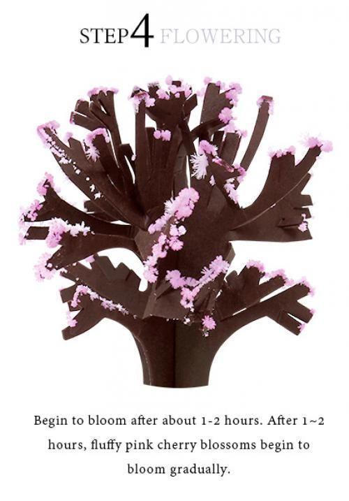 iWish 2017 Visual 14x11cm Pink Big Grow Magic Paper Sakura Tree Magically Growing Japanese Trees Kit Desktop Cherry Blossom Christmas