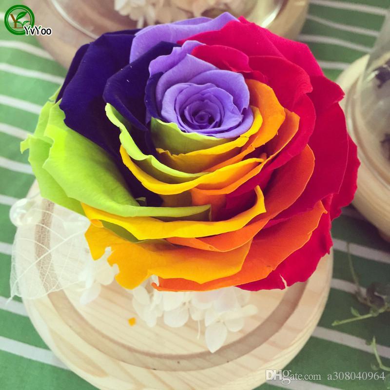 Bella rosa arcobaleno semi di fiori semi di piante bonsai giardino di casa 30 particelle / lotto W011