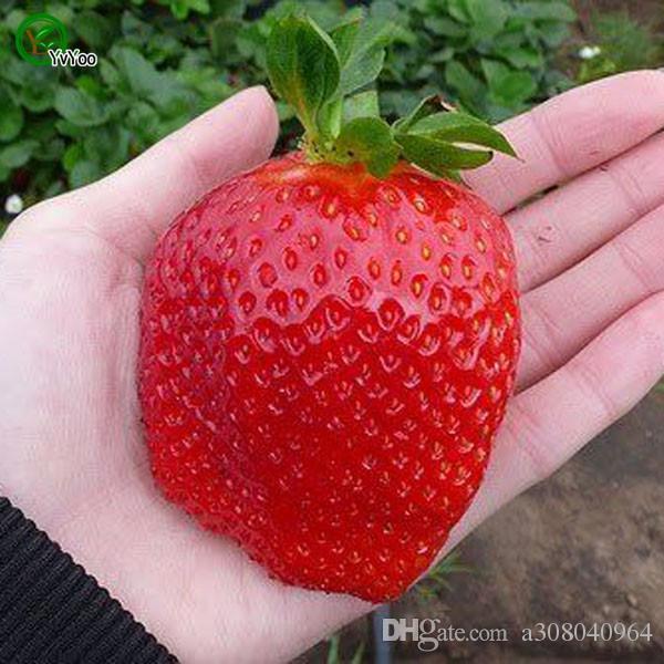 Riesen Erdbeeren Samen Bio-Obstbaum-Samen Home Garten Obst Pflanze, ist essbar! 100 Stück F010