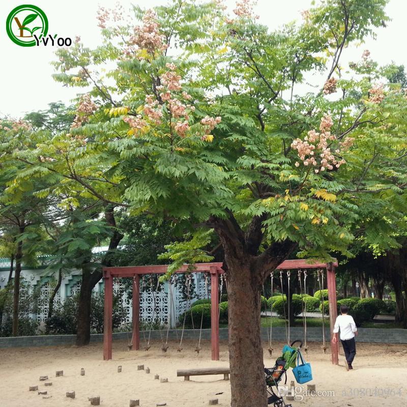 Ağaç Tohumları Kırmızı Koelreuteria Tohumları Bonsai Ağacı Tohumları Ev Bahçe Dekorasyon 20 Parçacıklar / Çanta Y04