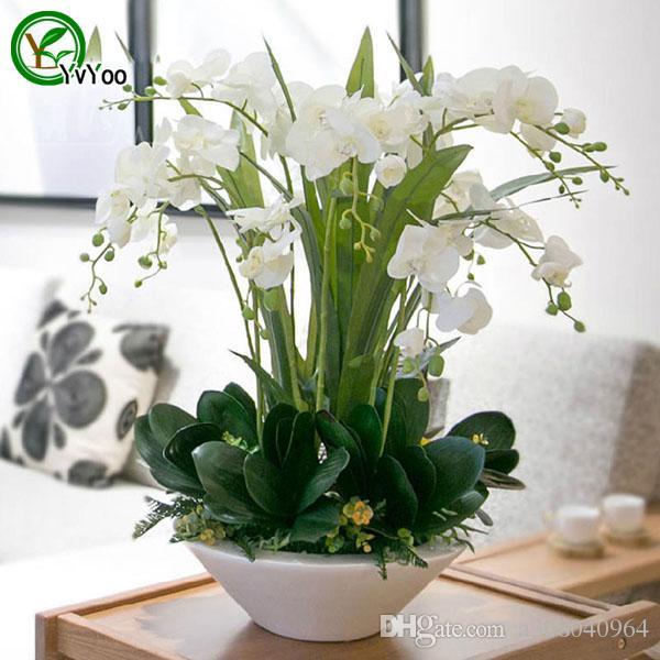 Acquista Semi Di Orchidea Falena Semi Di Fiori Pianta Di Bonsai Da