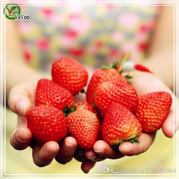 graines de fraise plantes de jardin Bonsaï semences de fruits et légumes biologiques E018