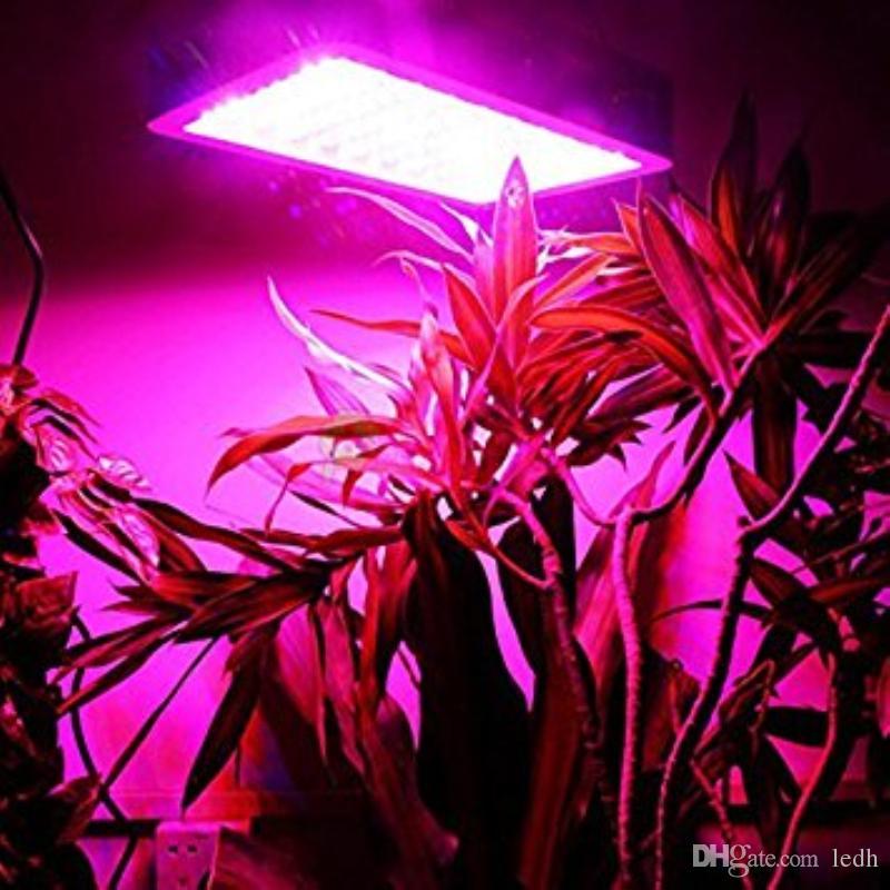 how light plants work grow lights full over spectrum plant bloghow led