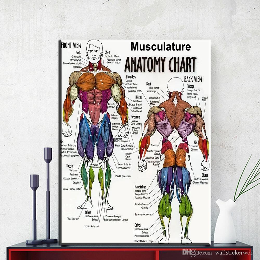 1 Pcs Human Musculature Anatomy Poster Paintings On Canvas Modern Wall  Pictures For Living Room Home Decor No Frame Oil Painting