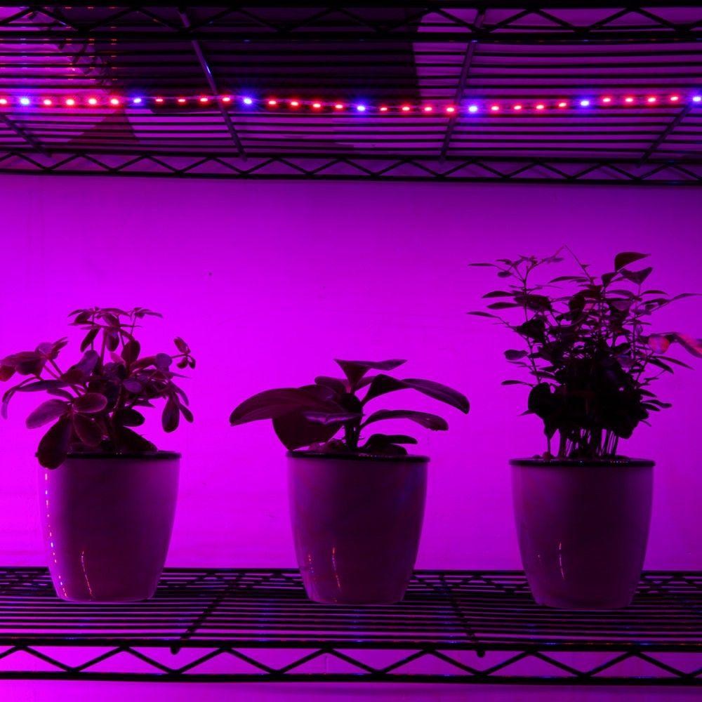 LED 조명 DC12V 5050 성장하는 LED 스트립 식물 성장 빛 IP67 Waterprooof 묘목 온실 수경 식물 5 메터 / 몫