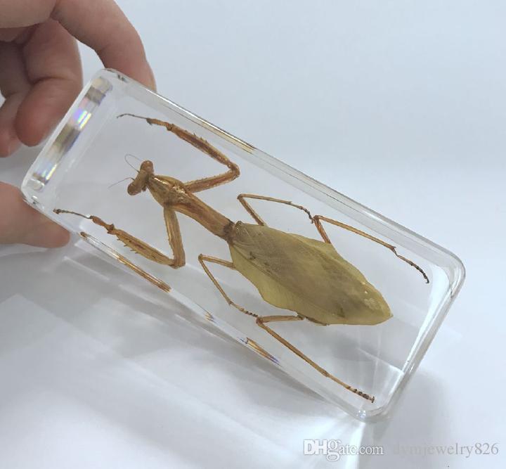 ÜCRETSIZ KARGO YQTDMY Vintage Dua Mantis Böcek Numune Temizle Lucite Kağıt Ağırlığı El Sanatları