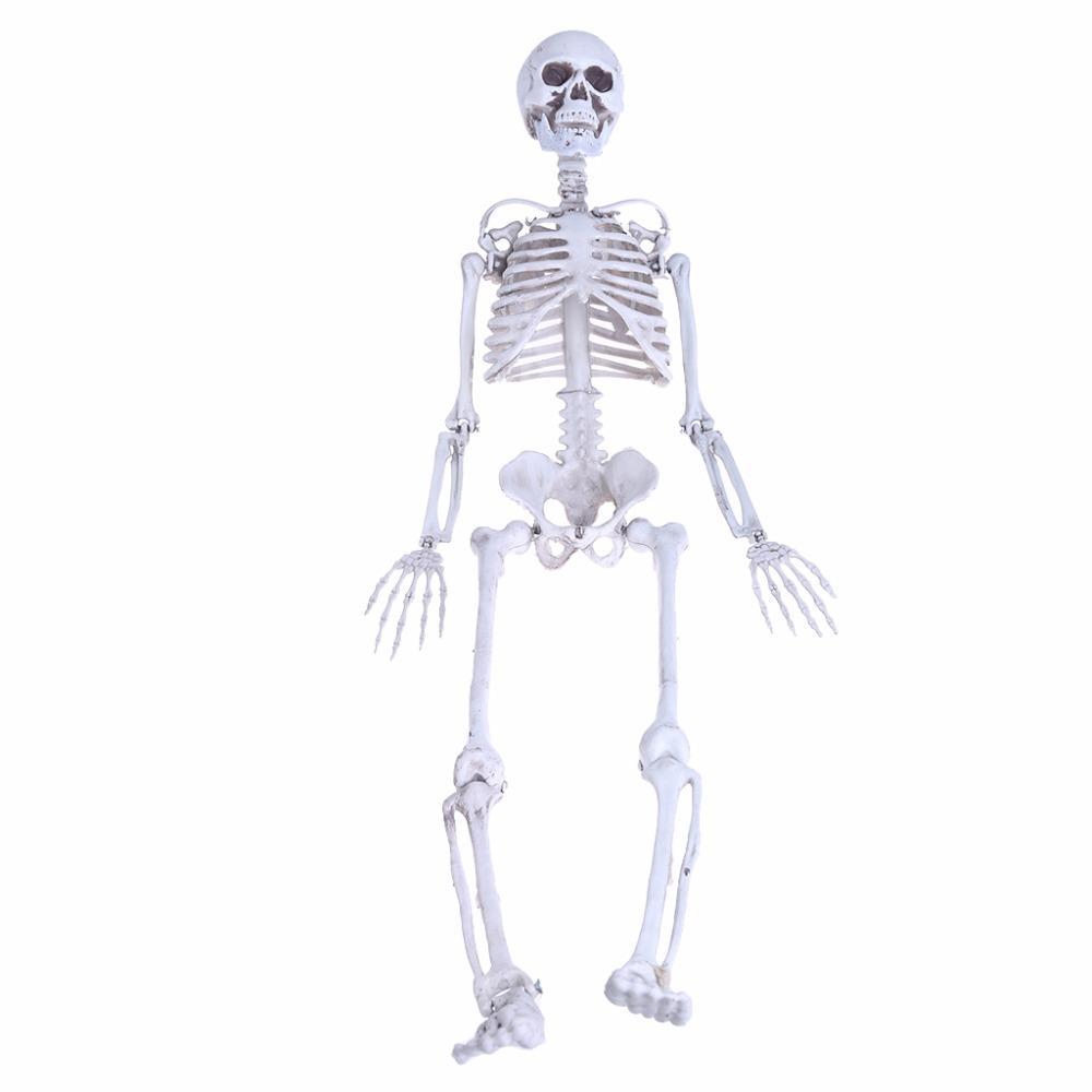 2018 Wholesale Medium Skull Full Body Anatomical Model For Halloween ...