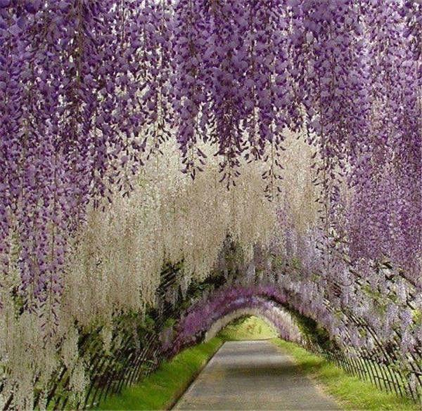 غاتسبي العظيم الرئيسية حديقة حديقة زهرة decoation أنيقة الحرير الاصطناعي زهرة الوستارية كرمة زينة الزفاف أكثر كمية أكثر جمالا