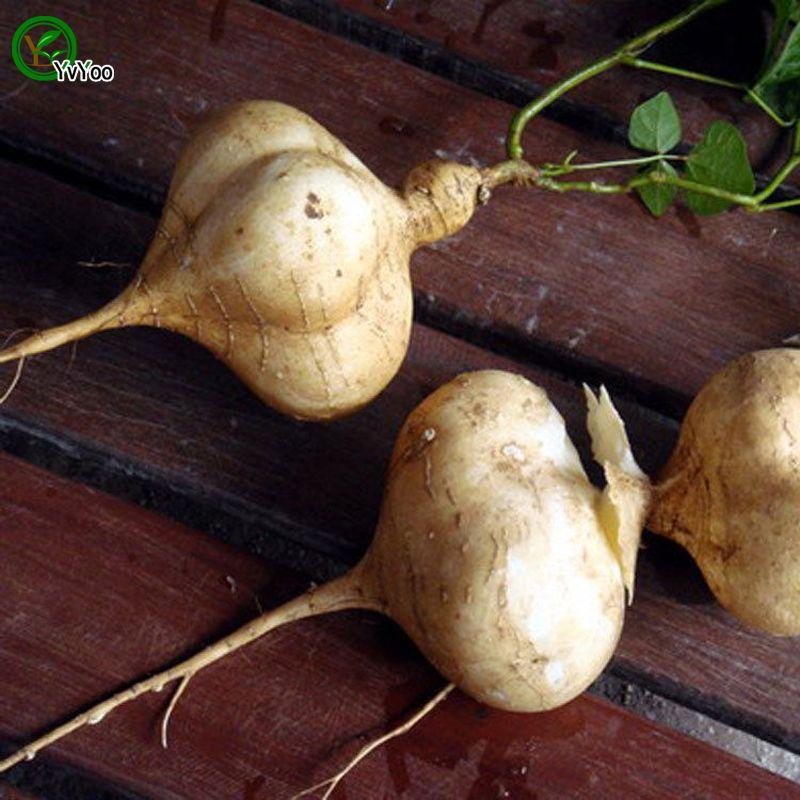 Pommes de terre douces plantes jardin Graines Bonsai fruits et graines de légumes D03