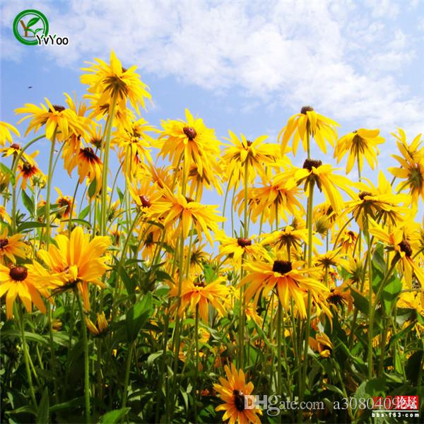 2018 rudbeckia solar eclipse flower seeds perennial garden 2018 rudbeckia solar eclipse flower seeds perennial garden decoration plant l09 from a308040964 051 dhgate mightylinksfo