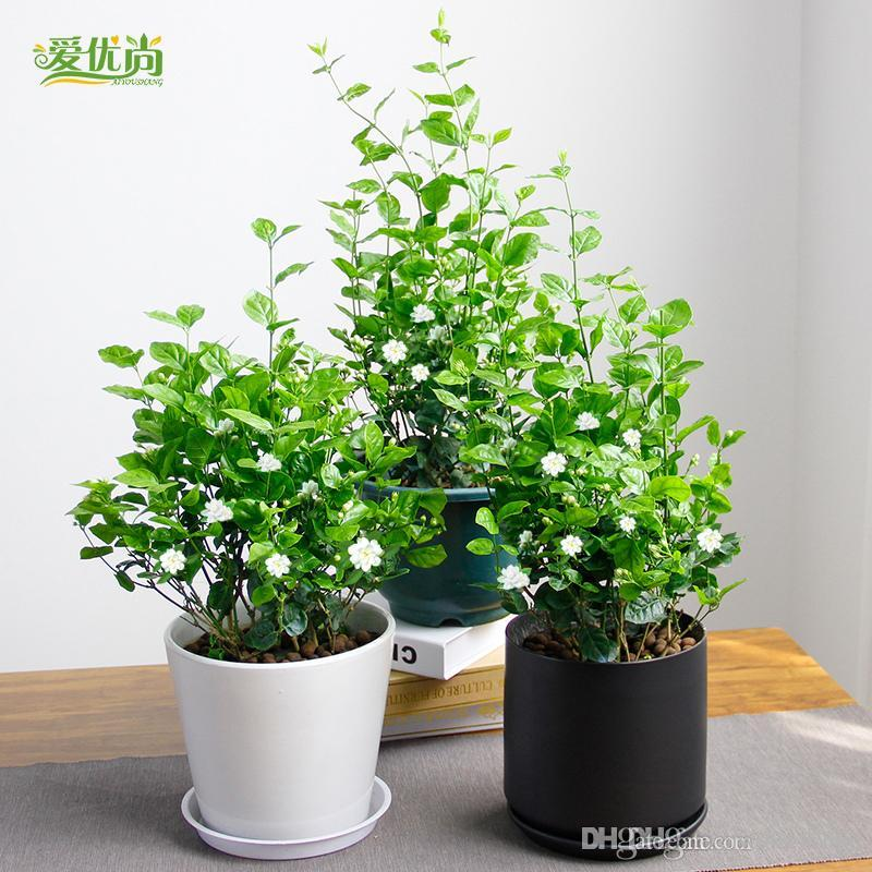 Online cheap small indoor flowers seeds potting balcony for Small indoor flowering plants