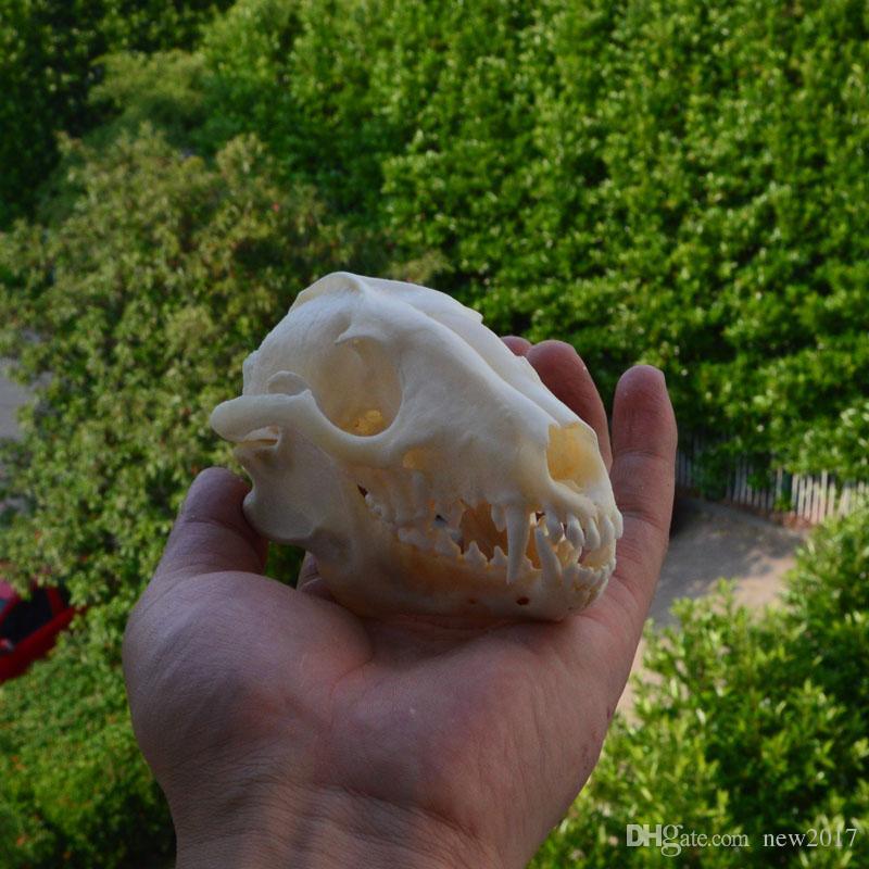 Real Fox Fox Skull Animal Bone Decor Unique Birthday Gift hombre cueva occidental