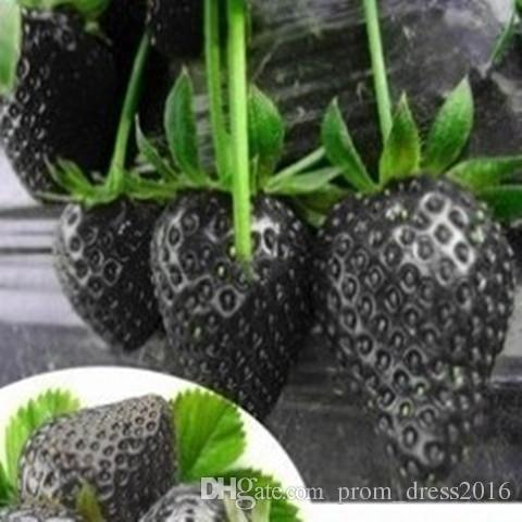 2016 8 kinds Strawberry Seeds, 1 Kind Total Green Purple Rose White Black Red BLUE Climbing Strawberry Seeds HY1159