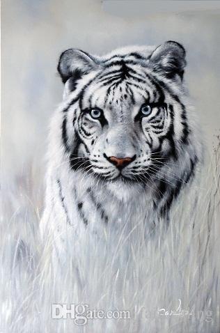 Acquista tigre bianca occhi azzurri gatto grande ritratto specie in