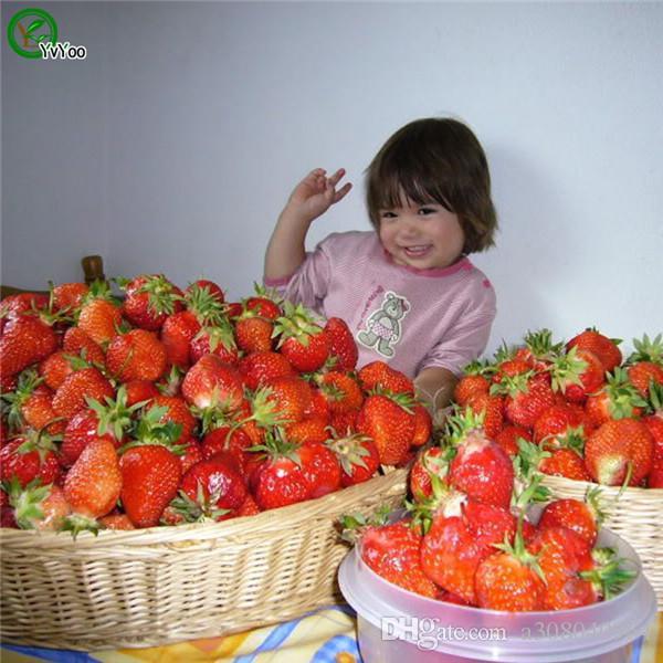 Géant Fraises Graines de fruits bio arbre Graines jardin fruits des plantes, peuvent être mangées! F010