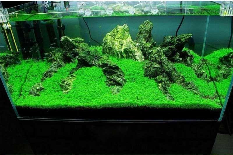 Grosshandel Heisser Verkauf Aquarium Gras Samen Wasser Wasserpflanze