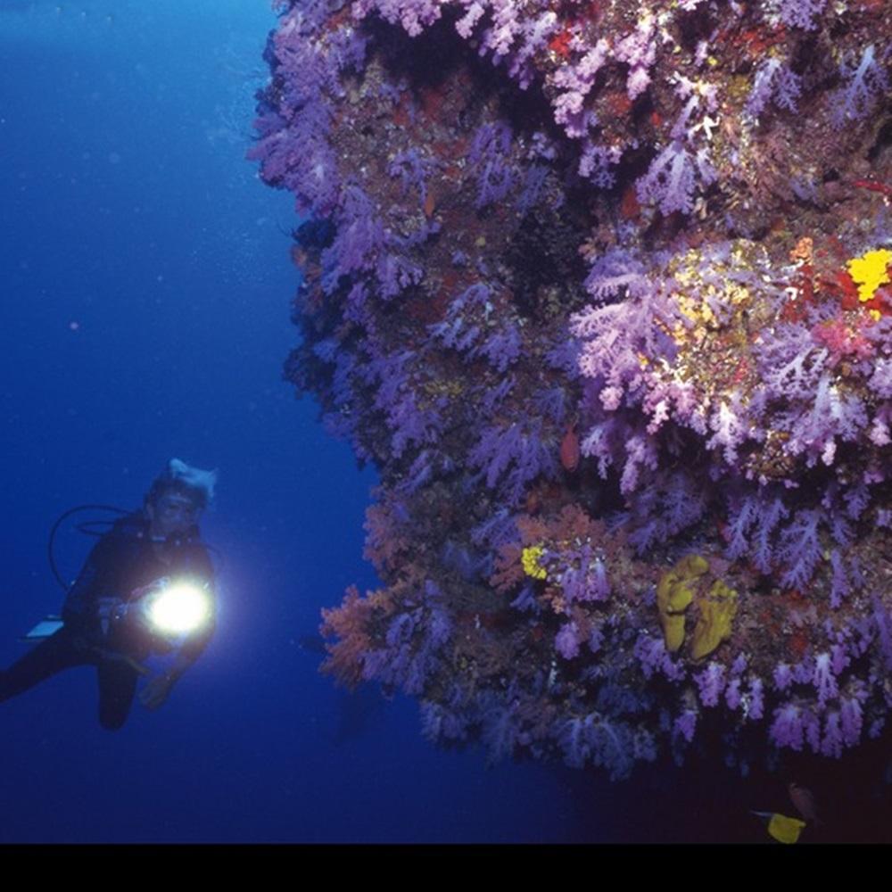 AloneFire DV44 Diving Flashlight 26650 Light Dive Torch Powerful Cree LED XM-L2 Underwater Flashlight Waterproof Diving Lamp lanterna