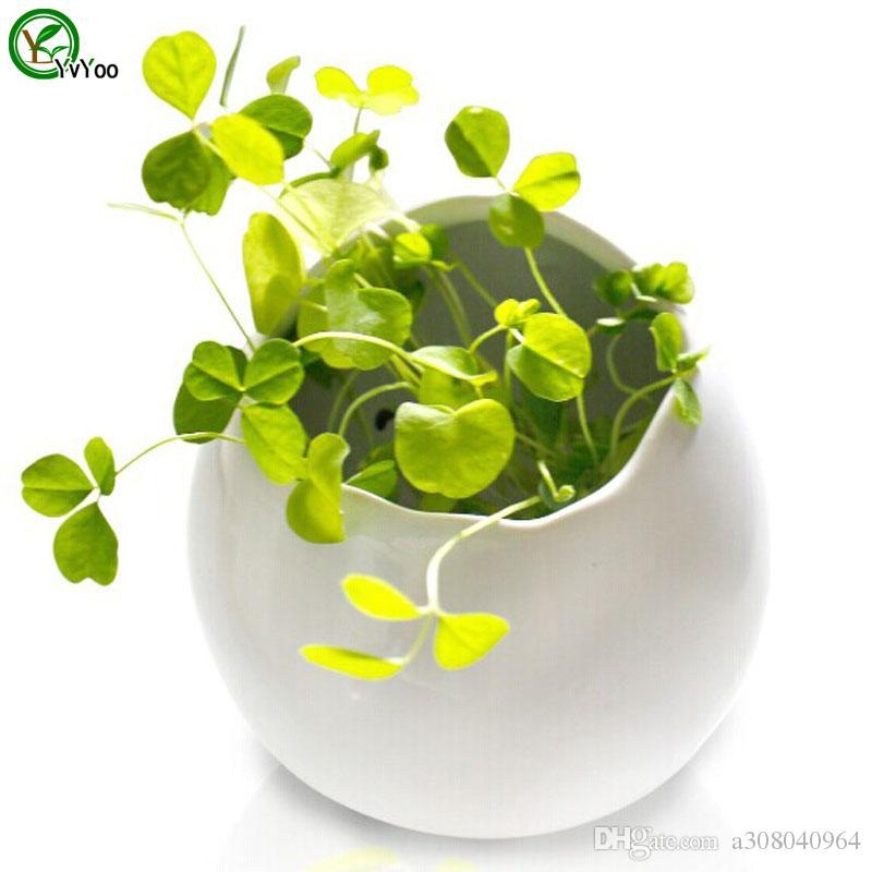 입자 클로버 씨앗 화분 재배자 정원 분재 잔디 씨앗 100 입자 / 많이 W019