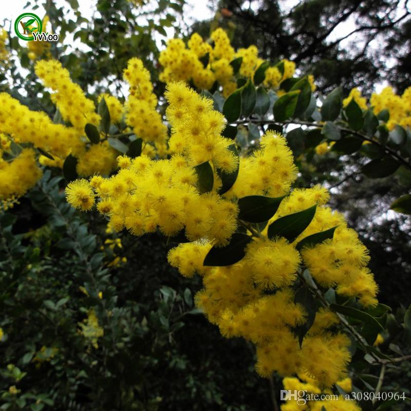 Sponge-tree sementes Árvore vaso Bonsai Courtyard Home Jardim Bonsai Planta J09