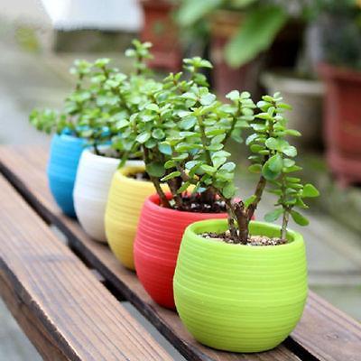 Mini-Round-Plant-Seed-Pots-Flower-Nursery-Pot-Planter-Office-Indoor-Planters-bonsal-Pots