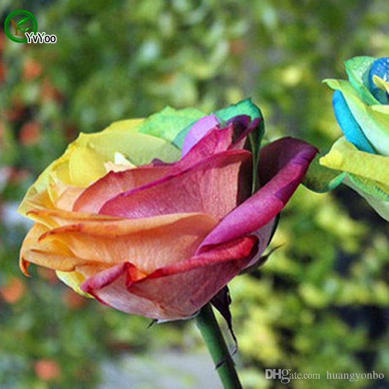 Schöne Regenbogen-Rosen-Samen seltene Blumensamen DIY Hausgartenanlage Einfach, 30 Partikel / Los W011 zu wachsen