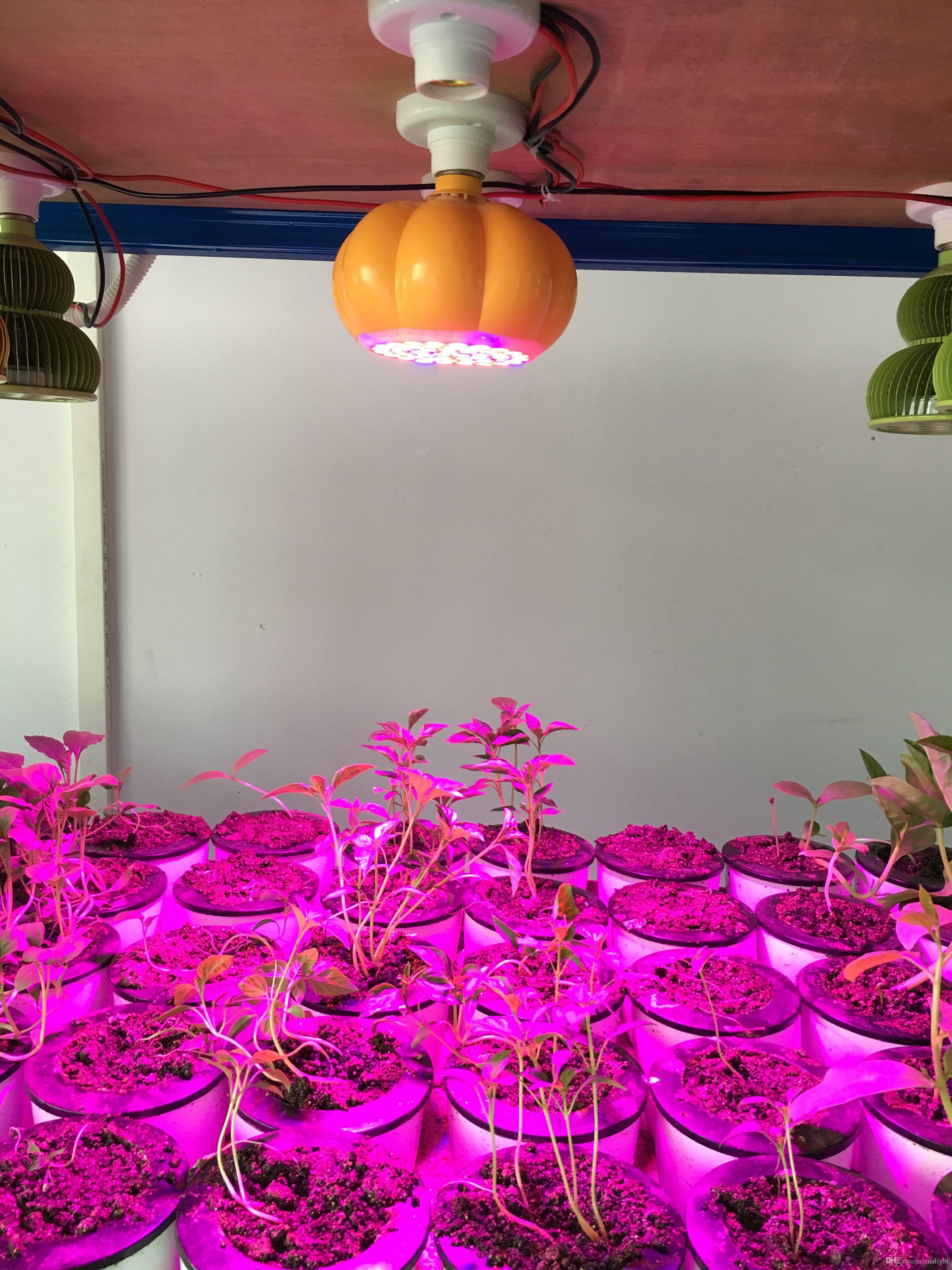 led plant grow light halloween decoration pumpkin basket plant grow light pumpkins shape hydroponic plant growing light easy to grow plants plant lighting - Growing Halloween Pumpkins