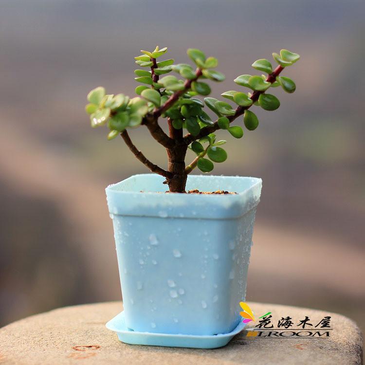 Online Cheap Bonsai Planters Plastic Table Mini Succulents Plant Pots And  Plate Gardening Vase Square Flower Pot Colorful Jy339 By Elefactory |  Dhgate.Com