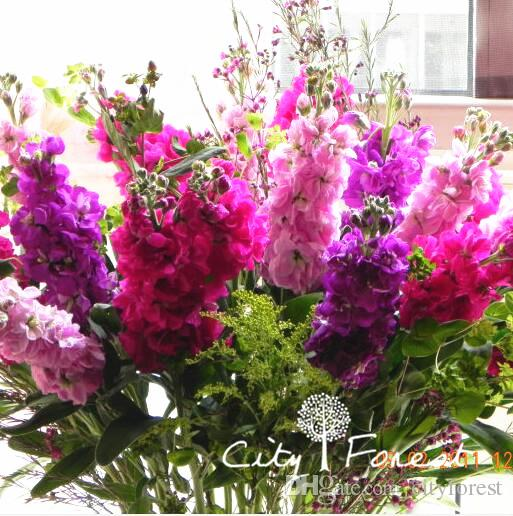 Mixed Color Matthiola Incana Stock Flower 200 Seeds Great For Cut