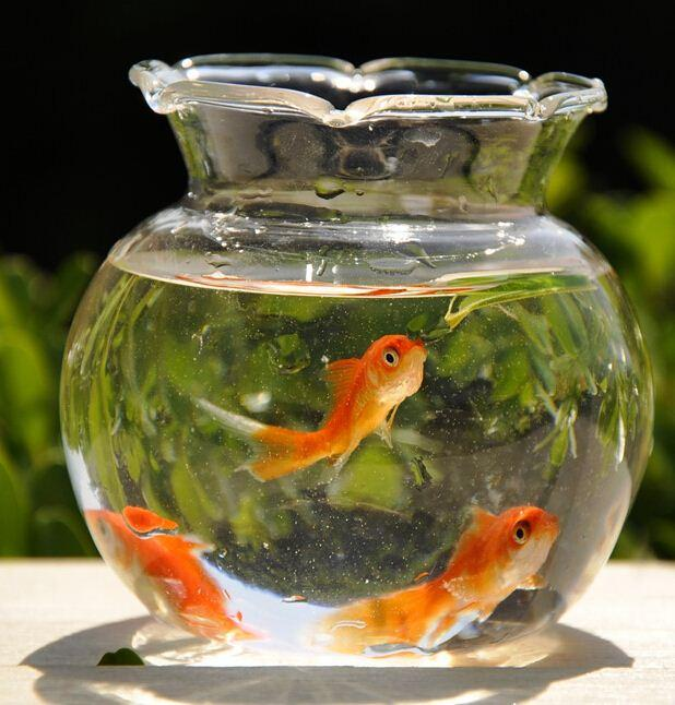 2pcs Fish Bowl Transparent Glass Vase Modern Fashion Hydroponic