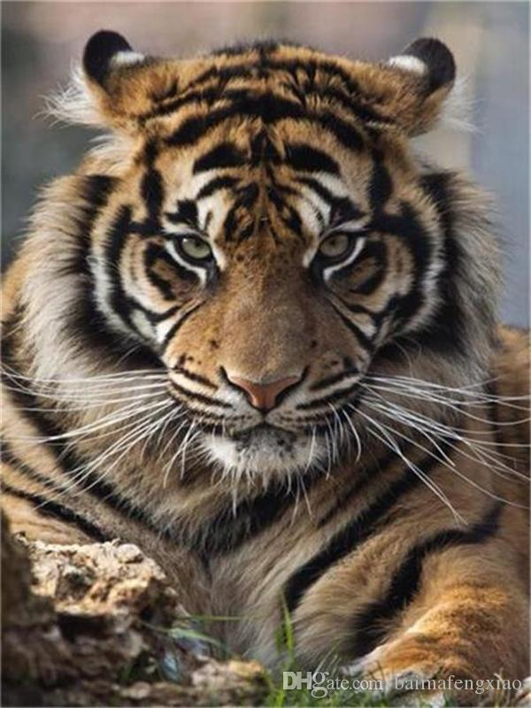 Diy diamond painting cross stitch animal tiger104 full round drill set unfinished diamond mosaic Room