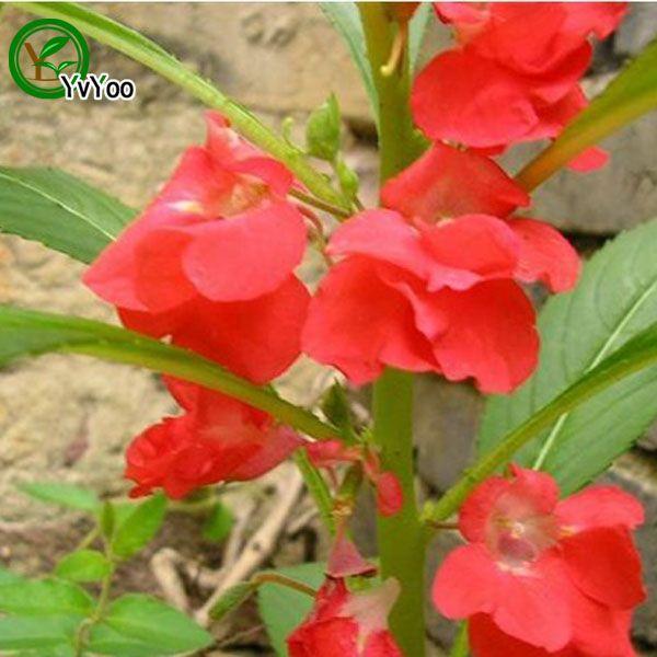 MIX Impatiens Seeds Flower Pot Planters Garden Bonsai Flower Seed 50 Particles / P015