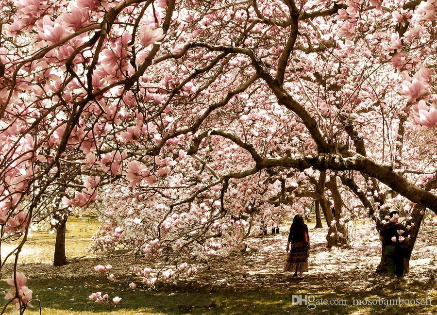 2019 Wholesale 40 Magnolia Denudata Magnolia Tree Seeds From