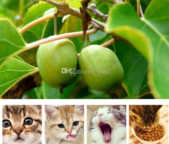 Bowls & Feeders Hot Cat Cleaning Teeth Pure Natural Catnip Pet Molar Toothpaste Stick Silvervine Actinidia Fruit Matatabi Snacks Sticks