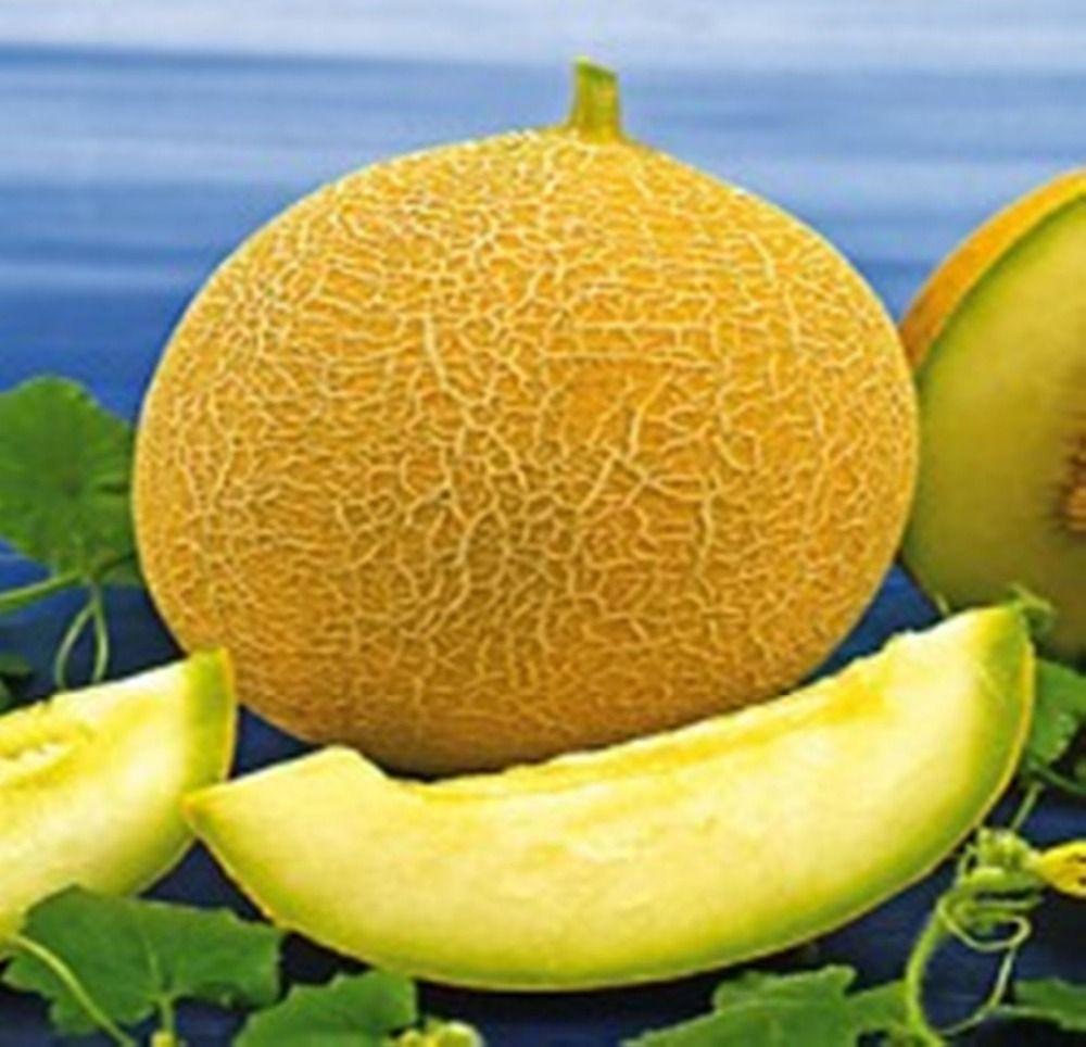 Seltene Samen süße gelbe Honigmelone Zolotisatya-Golden Bio Heirloom Seed S067