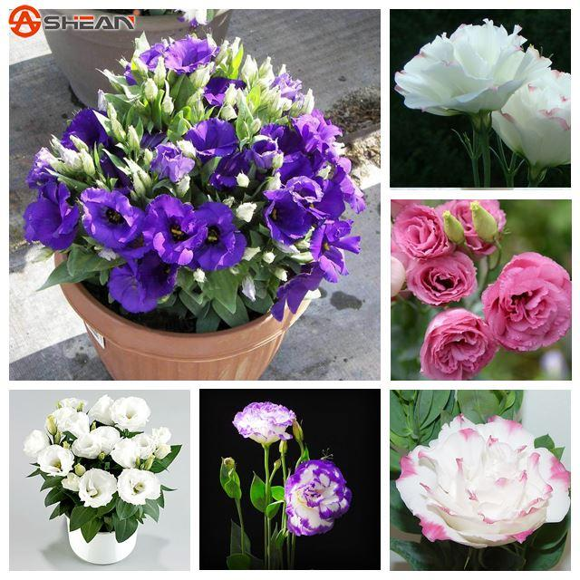 Цветов николь 7 цветов оптовая продажа цветов цветы купить краснодаре