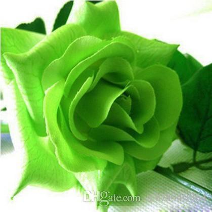 Yeşil Gül Çiçek Tohumları Bonsai Çiçek Kapalı Odaları için Tohum 100 Parçacıklar /