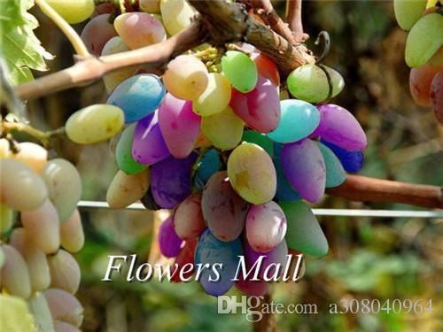 분재 과일 무지개 포도 화려한 달콤한 포도 나무 과일 식물 씨앗 정원 장식 공장 A74