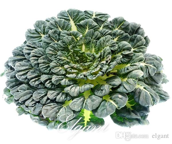Black Dwarf Chinese Cabbage Vegetable Seeds Asian Greens Tatsoi 500 Pcs Easy-growing Non-Gmo Vegetable for Autumn Winter Harvest