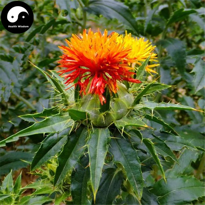 2018 buy real carthamus tinctorius seeds plant safflower grow chinese herbal campanulaceae red flower hong hua from lyw5156 543 dhgatecom