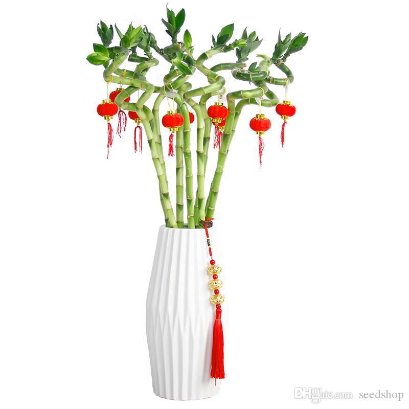 is our hydroponic Dendrocalamus seed plants potted indoor living room desk flower taste good seed plants