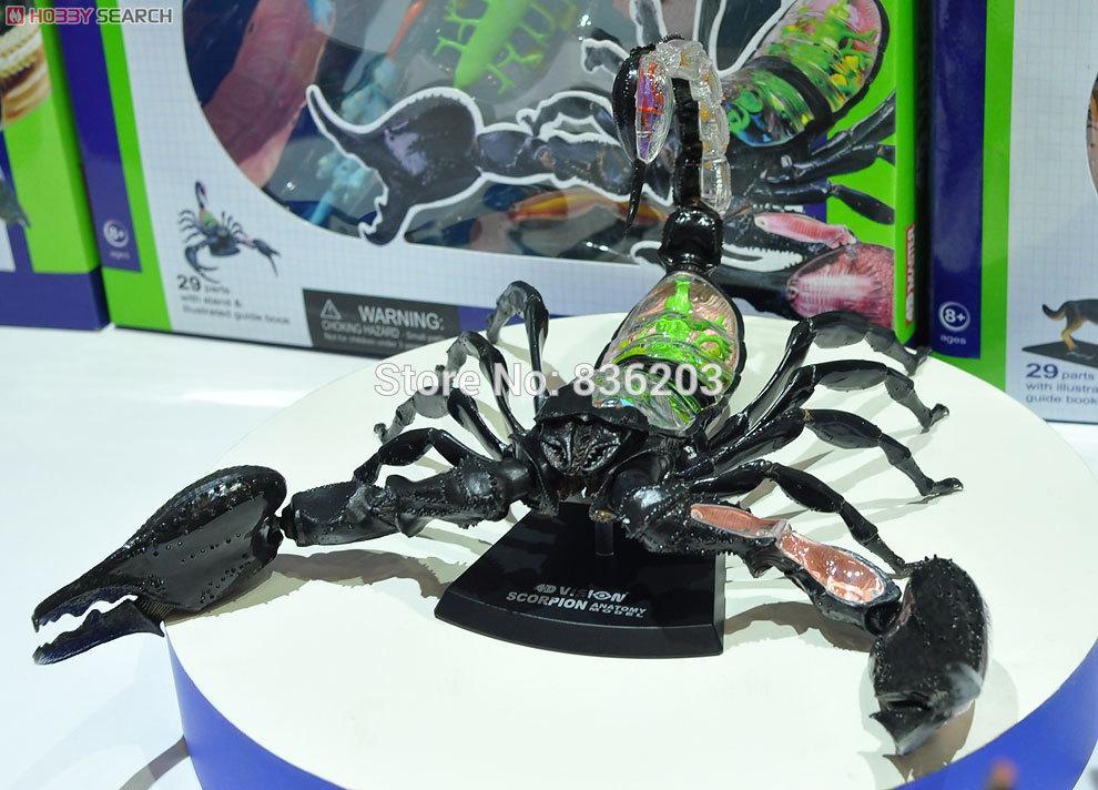 Großhandel Großhandels 4d Master Vision Scorpion Modell Anatomie ...
