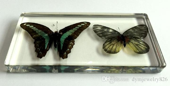 الحرة الشحن Yqtdmy الاكريليك الراتنج جزءا لا يتجزأ من عينة حقيقية فراشة شفافة حشرة LearningEducation بارد الحشرات 0001