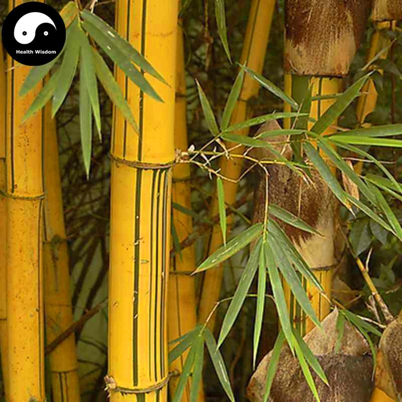 2018 buy golden bamboo tree seeds plant bambusa vulgaris from