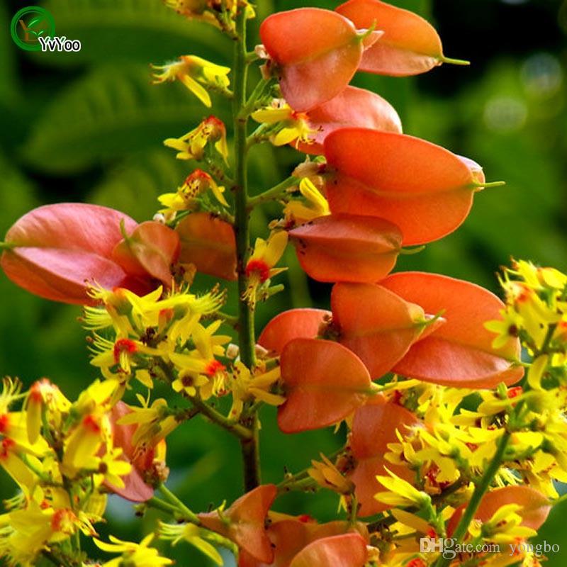 Koelreuteria Seeds Tree Potted Bonsai Courtyard Home Garden Bonsai Plant Z015
