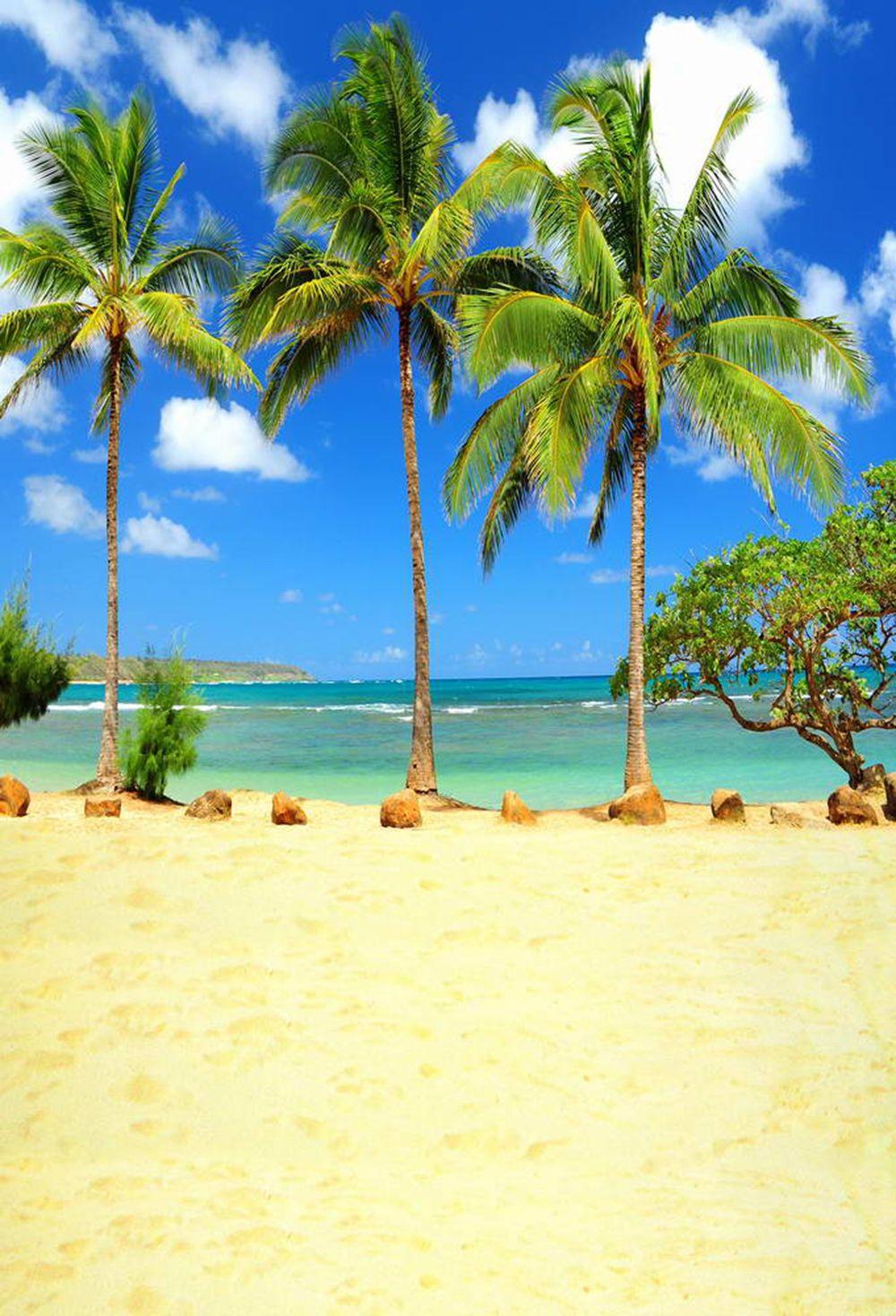 acheter palmiers plage th me photographie studio fond sable plancher ciel bleu mer eau. Black Bedroom Furniture Sets. Home Design Ideas