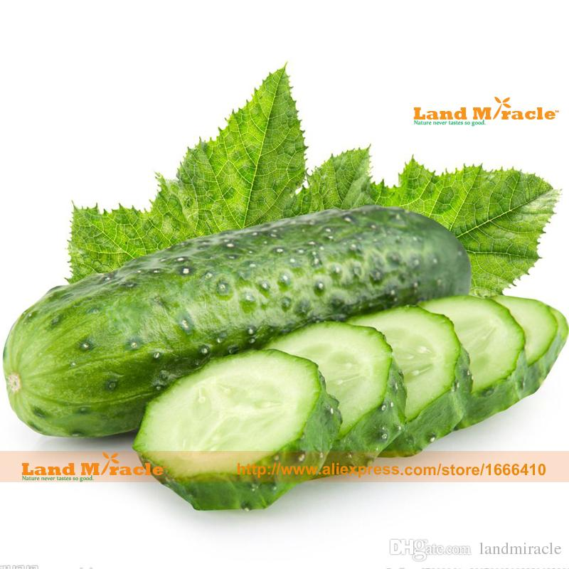 100% True Fruit Cucumber Seed, 20 Seeds/Pack, Extra-Crisp,Extra-Sweet, New Hybrid Cuke Vegetable Seed-Land Miracle