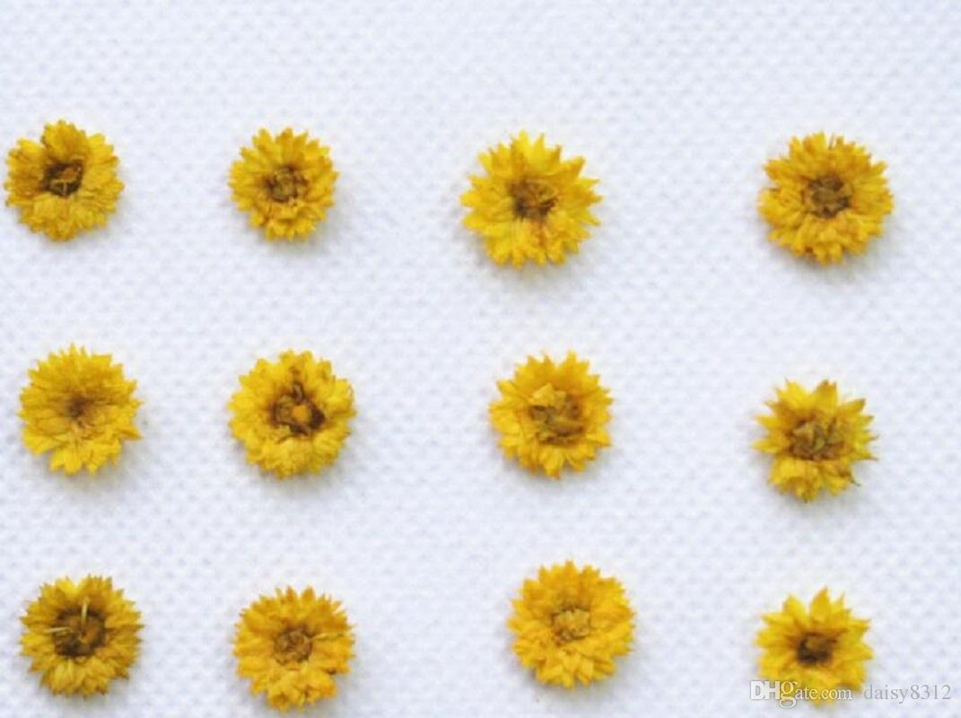 Pressed Dried Anaphalis Flower Dry Plants For Epoxy Resin Pendant Necklace Jewelry Making Craft DIY Accessories