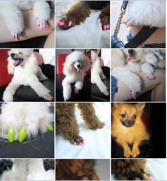 20 teile / los Größe XS-XXL14 Farbe Weiche Haustier Katze Hund Nagel Kappen Klaue Control Pfoten ab + Klebstoff Kleber Heimtierbedarf Zubehör C169S