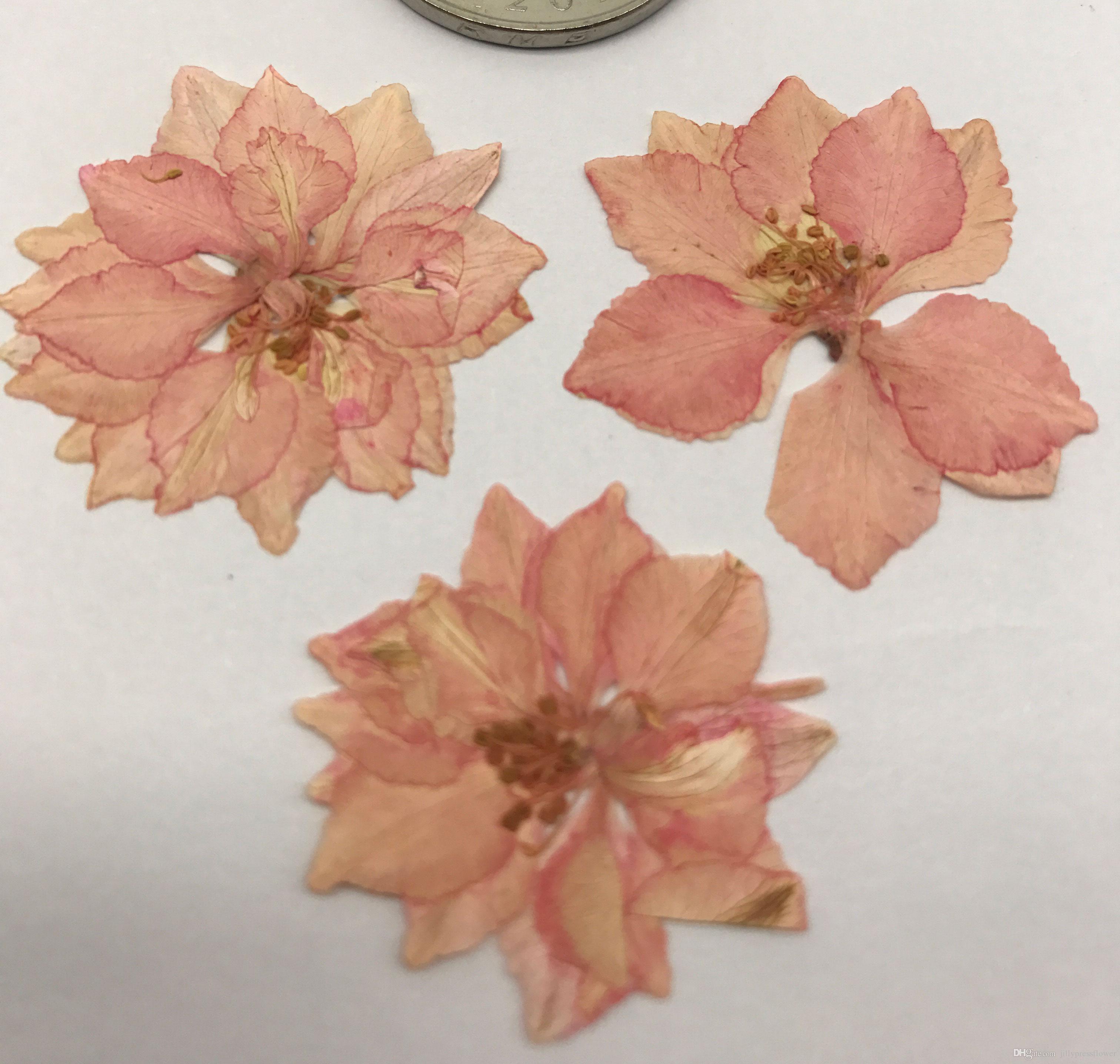 Kids Birthday Party Supplies Dye Pink Larkspur Dried Press Flower